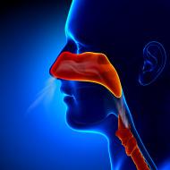 ניתוח יישור מחיצת האף